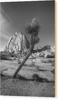 The Crooked Joshua Tree Wood Print by Peter Tellone