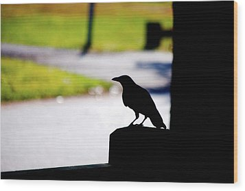 Wood Print featuring the photograph The Crow Awaits by Karol Livote