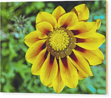 Wood Print featuring the photograph The Daisy by Matthew Bamberg