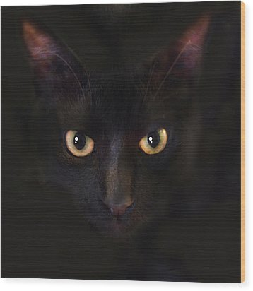 The Dark Cat Wood Print