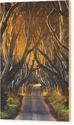 The Dark Hedges IIi Wood Print by Pawel Klarecki