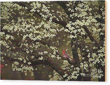 Wood Print featuring the digital art The Dogwoods And The Cardinal by Darren Fisher