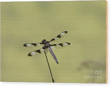 The Dragonfly Wood Print by David Bishop