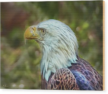 Wood Print featuring the photograph The Eagle Look by Hanny Heim