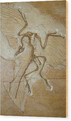 The Earliest Bird, Archaeopteryx Wood Print by Jason Edwards