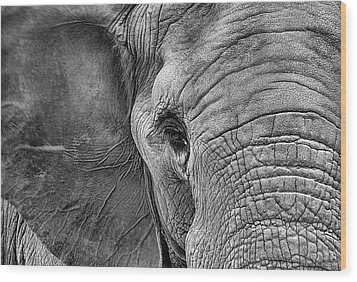 Wood Print featuring the photograph The Elephant In Black And White by JC Findley