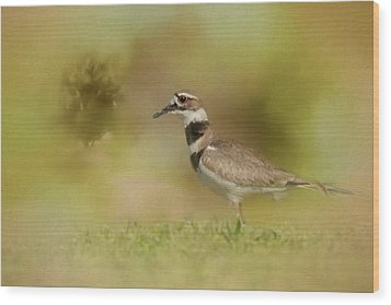 The Elusive Killdeer Wood Print by Jai Johnson