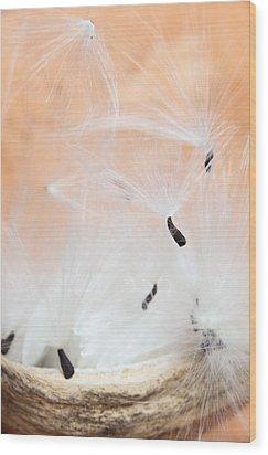 The Escape Wood Print by Paul Cowan