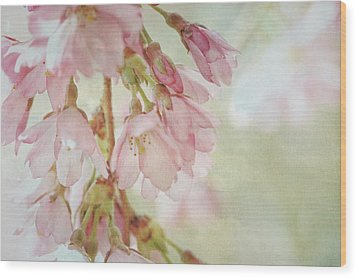 Wood Print featuring the photograph The Essence Of Springtime  by Connie Handscomb