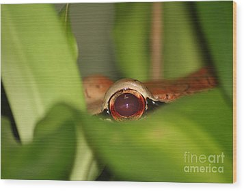 The Eye Of The Boa Wood Print by April Holgate