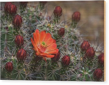 Wood Print featuring the photograph The First Bloom  by Saija Lehtonen