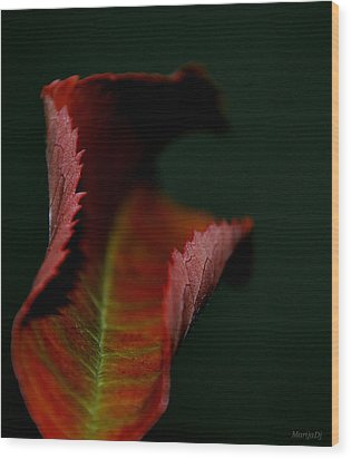 Wood Print featuring the photograph The First Day Of Fall by Marija Djedovic