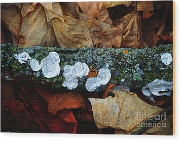 Wood Print featuring the photograph The Forest Floor - Cascade Wi by Mary Machare