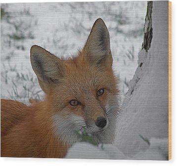 The Fox 4 Wood Print by Ernie Echols