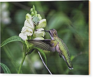 The Frog And The Hummingbird Wood Print