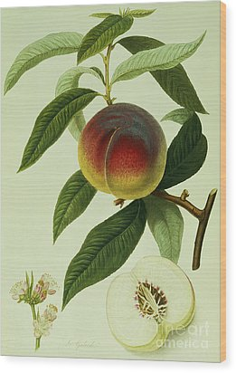 The Galande Peach Wood Print by William Hooker