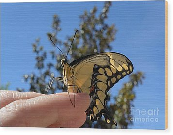 The Glorious Swallowtail  Wood Print