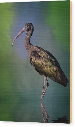The Glossy Ibis Stroll Wood Print