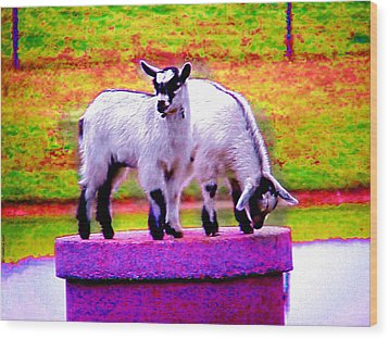 The Goats Wood Print