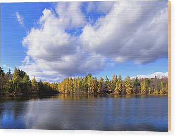 Wood Print featuring the photograph The Golden Forest At Woodcraft by David Patterson
