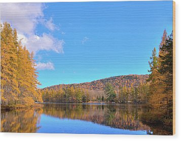 Wood Print featuring the photograph The Golden Tamaracks Of Woodcraft Camp by David Patterson