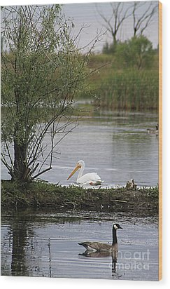 Wood Print featuring the photograph The Goose And The Pelican by Alyce Taylor