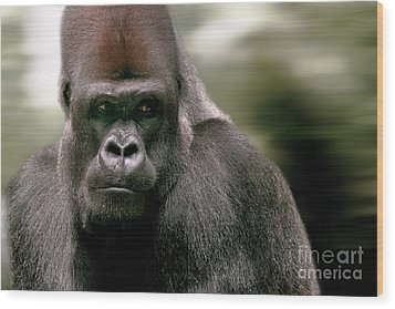 Wood Print featuring the photograph The Gorilla by Christine Sponchia