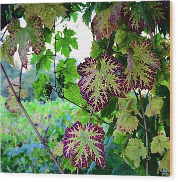 Wood Print featuring the photograph The Grape Vine by Corinne Rhode