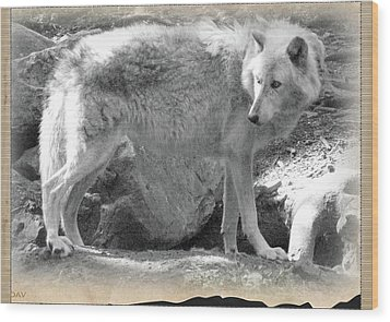 The Gray Wolf Wood Print by Debra     Vatalaro
