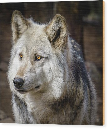 Wood Print featuring the photograph The Gray Wolf by Teri Virbickis