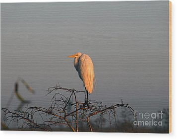 The Great Egret  Wood Print by David Lee Thompson