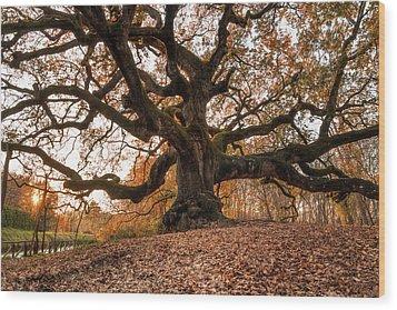The Great Oak Wood Print