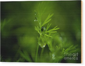 The Green Drop Wood Print