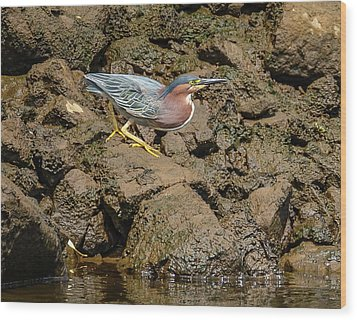 The Green Heron Wood Print