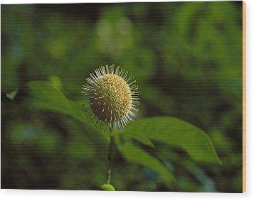 The Green Thing Wood Print by Thomas Firak