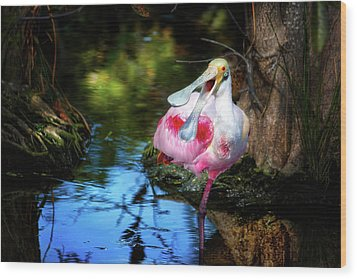 The Happy Spoonbill Wood Print by Mark Andrew Thomas