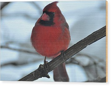 The Haughty Cardinal Wood Print by Healing Woman