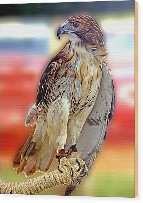 The Hawk Wood Print by Joseph Williams