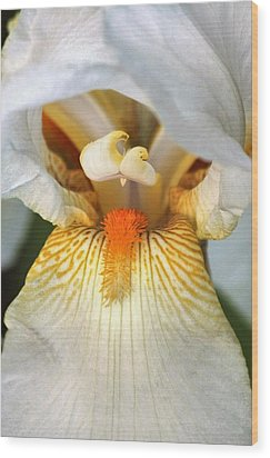 Wood Print featuring the photograph The Heart Of A Bearded Iris by Sheila Brown