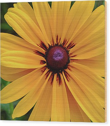 Wood Print featuring the photograph The Heart Of A Flower by Monte Stevens