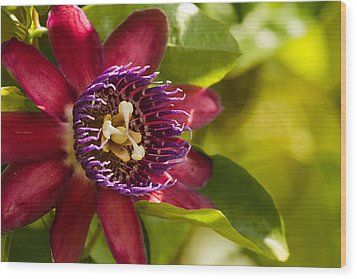 The Heart Of A Passion Fruit Flower Wood Print