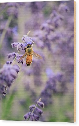 The Honey Bee And The Lavender Wood Print