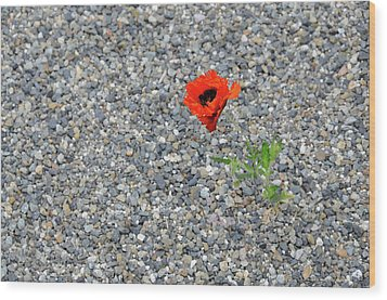 The Hopeful Poppy Wood Print by Michael Bessler