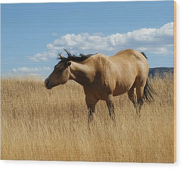 The Horse Wood Print by Ernie Echols