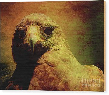 The Hunter . Portrait Of A Hawk . Texture . 40d7877 Wood Print by Wingsdomain Art and Photography