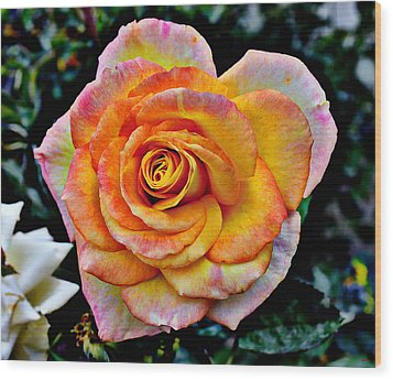 Wood Print featuring the mixed media The Imperfect Rose by Glenn McCarthy