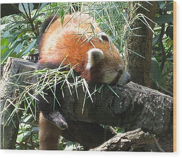 The Infamous Red Panda Wood Print by Eliot LeBow