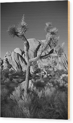 The Joshua Tree Wood Print by Peter Tellone