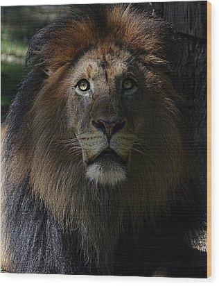 The King In Awe Wood Print by Ronda Ryan