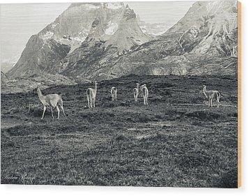 The Lamas Wood Print by Andrew Matwijec